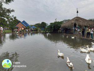 Hacienda La Gloria Estanque con Patos