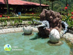 Estanque Cocodrilo - Ecoparque Vayju