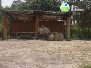 Rinocerontes - Bioparque Ukumari