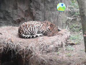 Fauna salvaje - Bioparque Ukumari